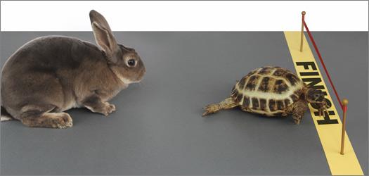 tortoise-hare1